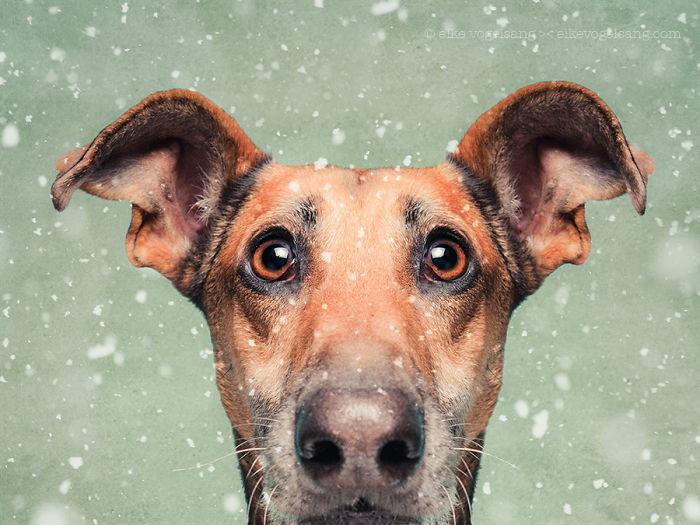 funny-playful-expressive-dog-portraits-elke-vogelsang-7