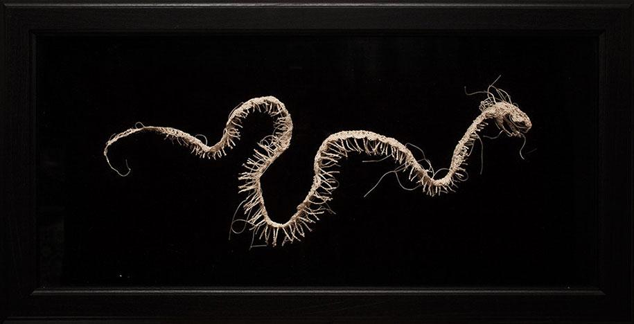 disturbing-crocheted-yarn-glue-animal-skeletons-caitlin-mccormack-10