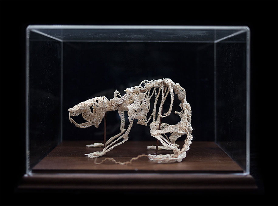 disturbing-crocheted-yarn-glue-animal-skeletons-caitlin-mccormack-6
