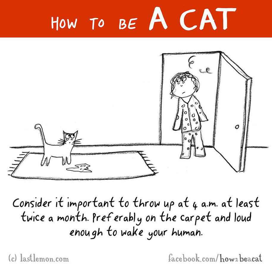 funny-illustration-guide-how-to-be-cat-lisa-swerling-ralph-lazar-17