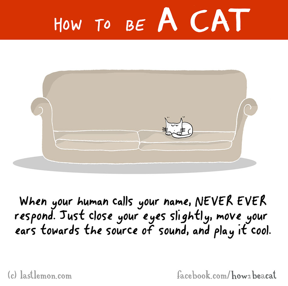 funny-illustration-guide-how-to-be-cat-lisa-swerling-ralph-lazar-2