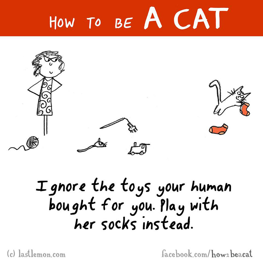 funny-illustration-guide-how-to-be-cat-lisa-swerling-ralph-lazar-25