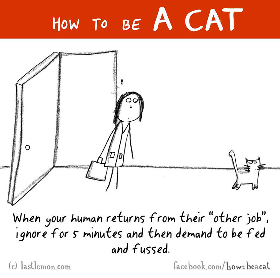 funny-illustration-guide-how-to-be-cat-lisa-swerling-ralph-lazar-38