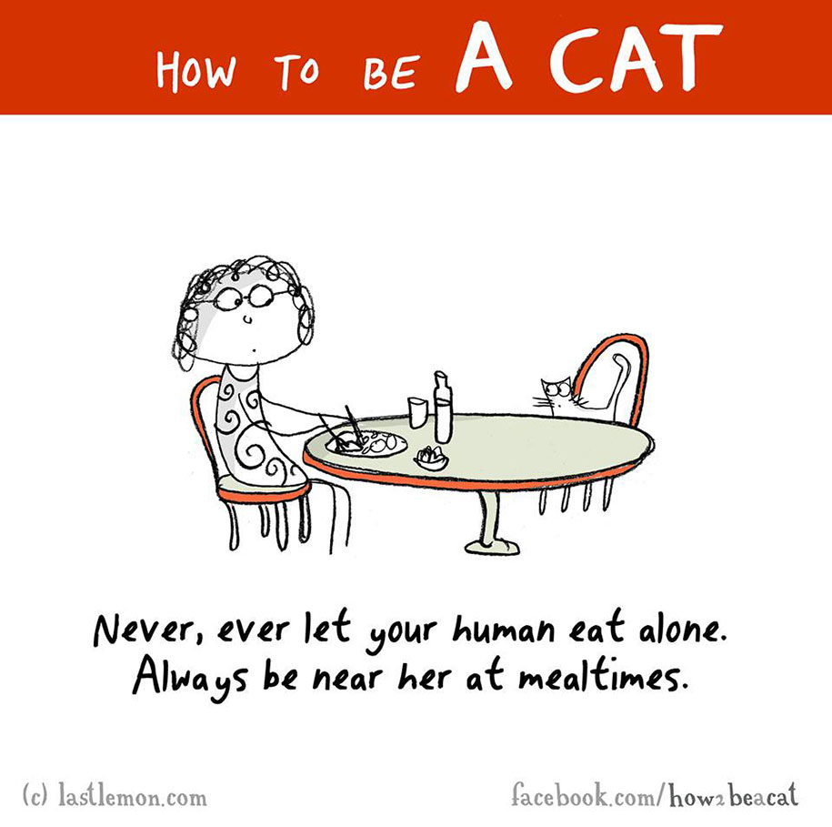 funny-illustration-guide-how-to-be-cat-lisa-swerling-ralph-lazar-44