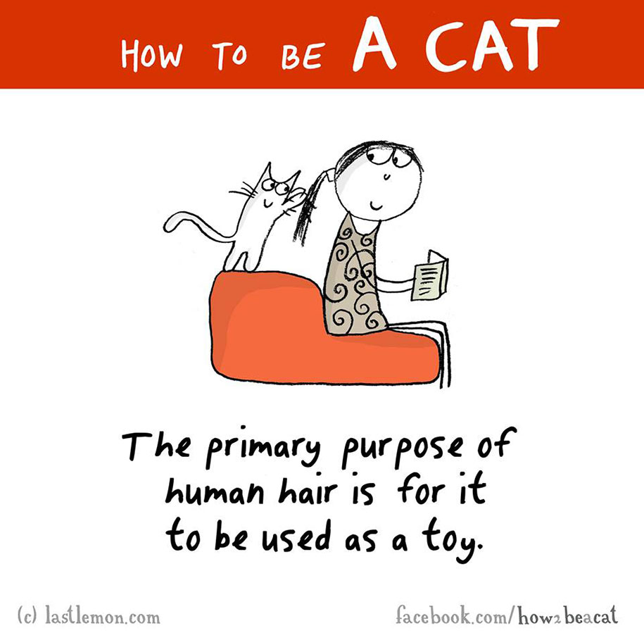 funny-illustration-guide-how-to-be-cat-lisa-swerling-ralph-lazar-6