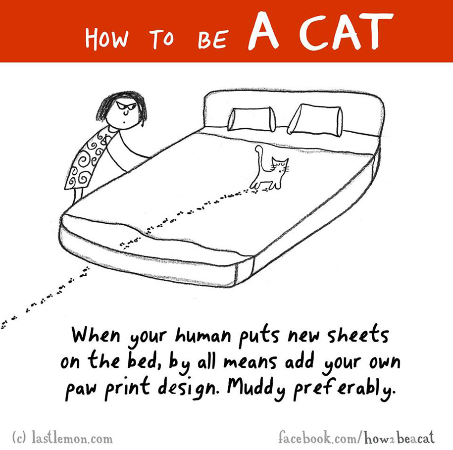 funny-illustration-guide-how-to-be-cat-lisa-swerling-ralph-lazar-61