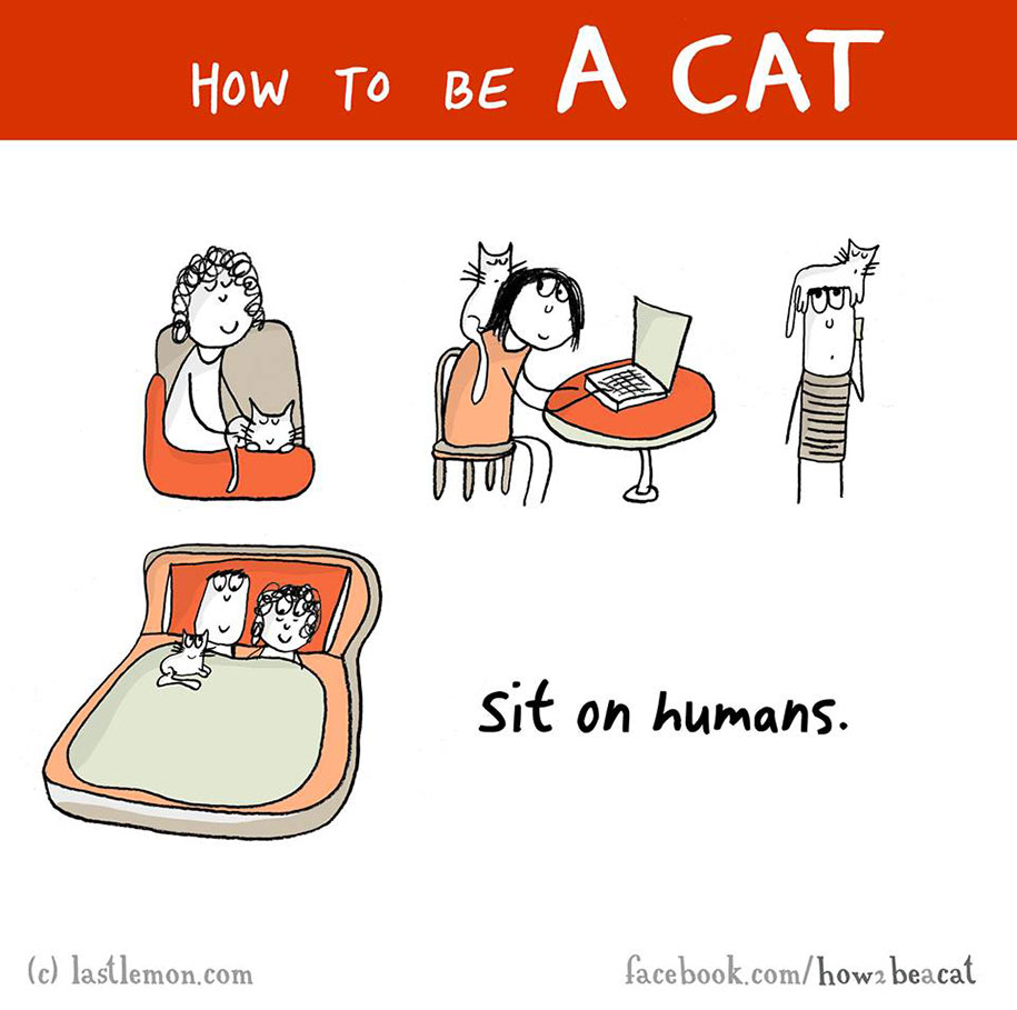 funny-illustration-guide-how-to-be-cat-lisa-swerling-ralph-lazar-98