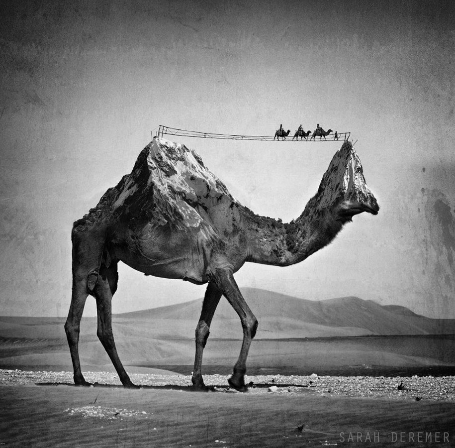 strange-animal-hybrids-surreal-experiments-sarah-deremer-12