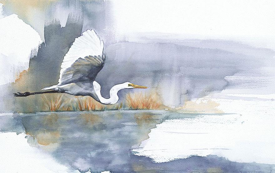 biologist-waterpainting-birds-anne-balogh-3