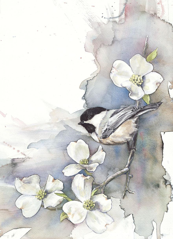 biologist-waterpainting-birds-anne-balogh-4