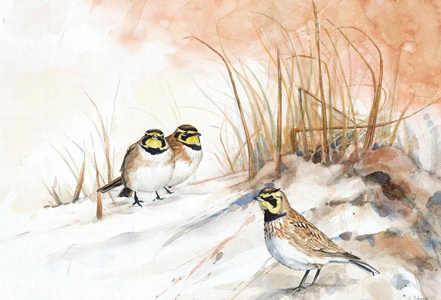 biologist-waterpainting-birds-anne-balogh-5