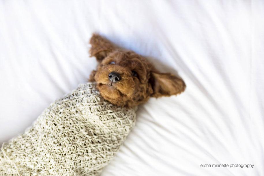tired-baby-questions-dog-newborn-photoshoot-elisha-minnette-photography-3