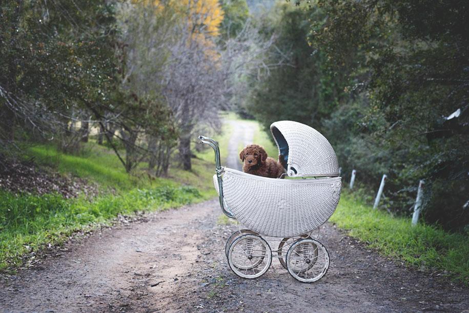 tired-baby-questions-dog-newborn-photoshoot-elisha-minnette-photography-4