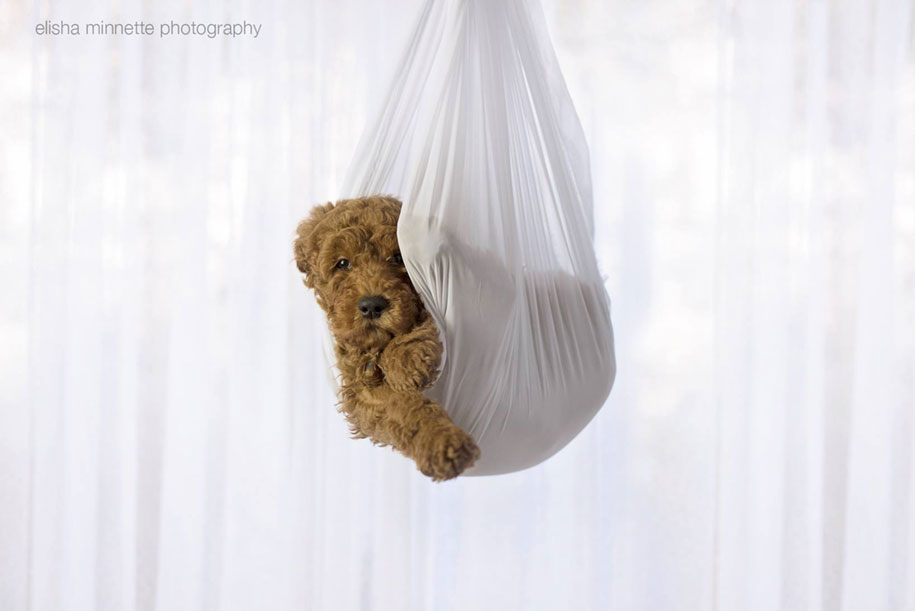 tired-baby-questions-dog-newborn-photoshoot-elisha-minnette-photography-5