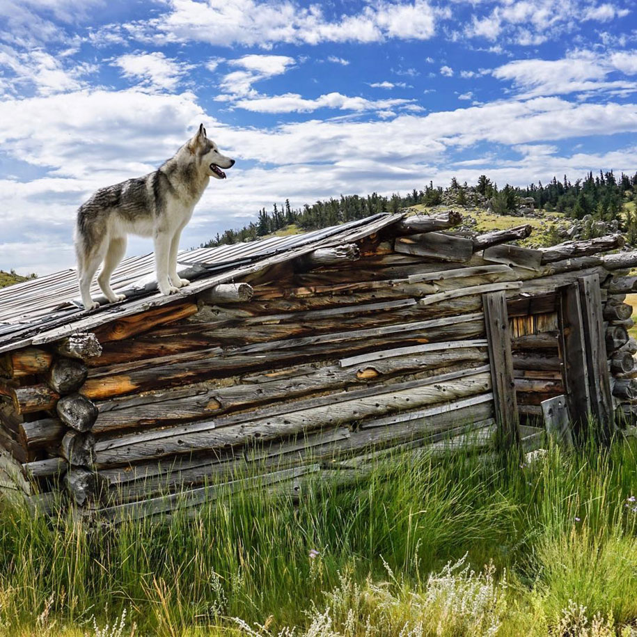 dog-nature-photography-loki-wolfdog-kelly-lund-29