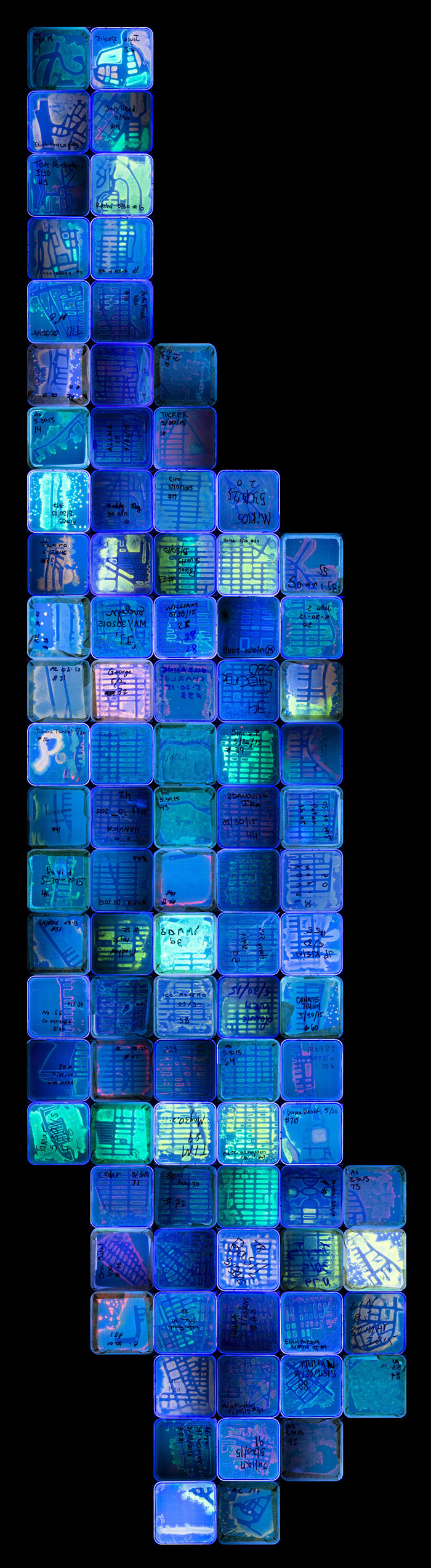 agar-jelly-petri-dish-microbe-bacteria-art-van-gogh-starry-night-1
