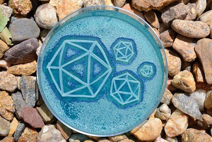 agar-jelly-petri-dish-microbe-bacteria-art-van-gogh-starry-night-4