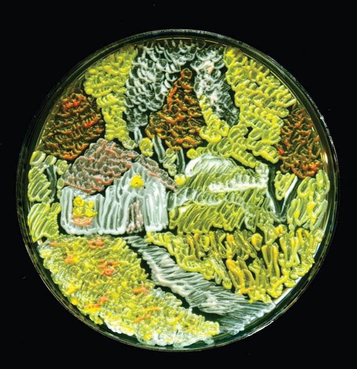 agar-jelly-petri-dish-microbe-bacteria-art-van-gogh-starry-night-8