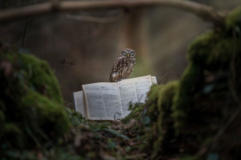 animal-photo-owl-hide-rain-mushroom-podli-tanja-brandt-1