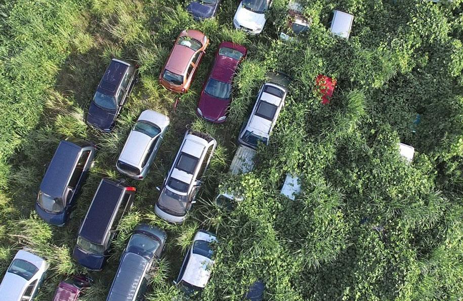 nature-reclaim-fukushima-exclusion-zone-photos-arkadiusz-podniesinski-1