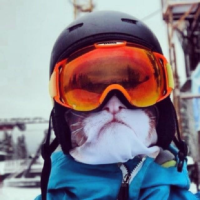 animal-face-balaclava-ski-mask-teya-salat-4