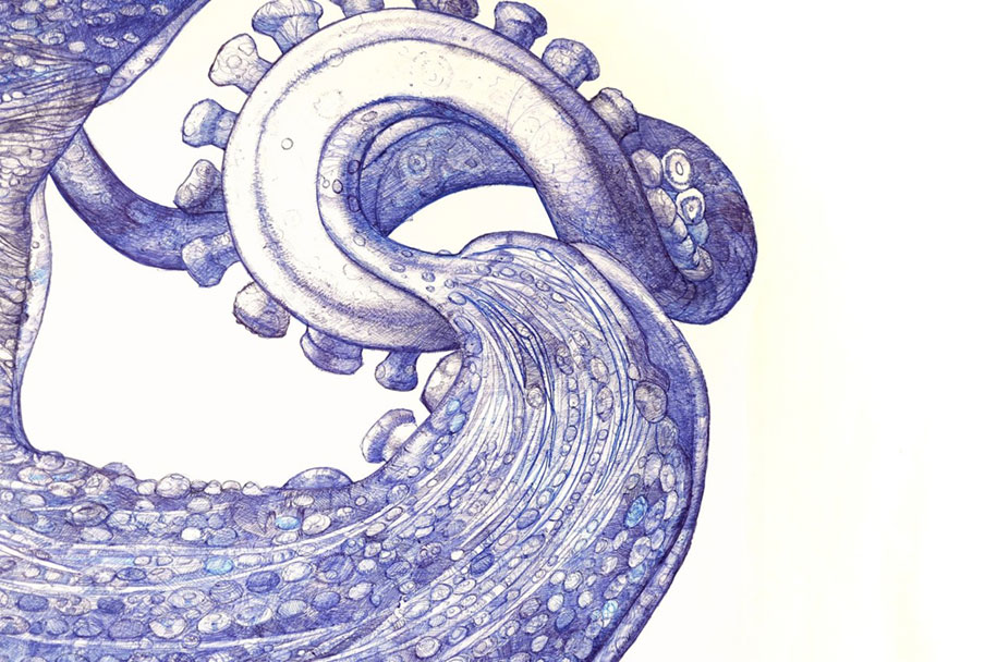 ballpoint-pen-drawing-deep-blue-octopus-raymond-cicin-3
