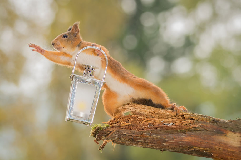 nature-animal-photography-backyard-squirrels-geert-weggen-1