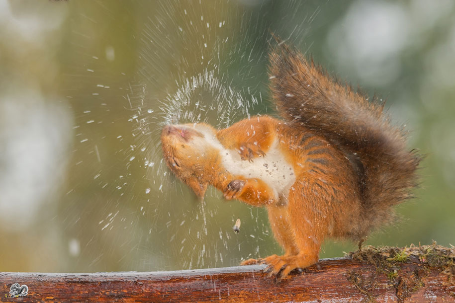 nature-animal-photography-backyard-squirrels-geert-weggen-14
