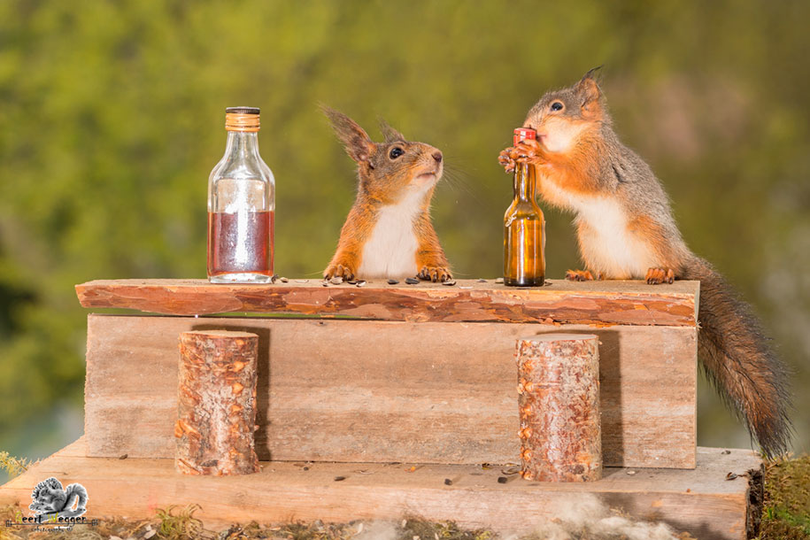 nature-animal-photography-backyard-squirrels-geert-weggen-15