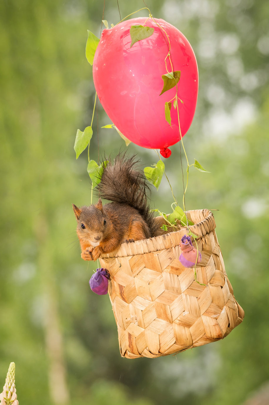 nature-animal-photography-backyard-squirrels-geert-weggen-17
