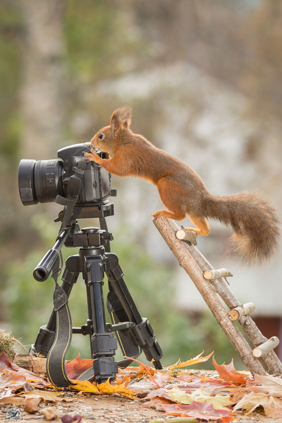 nature-animal-photography-backyard-squirrels-geert-weggen-18