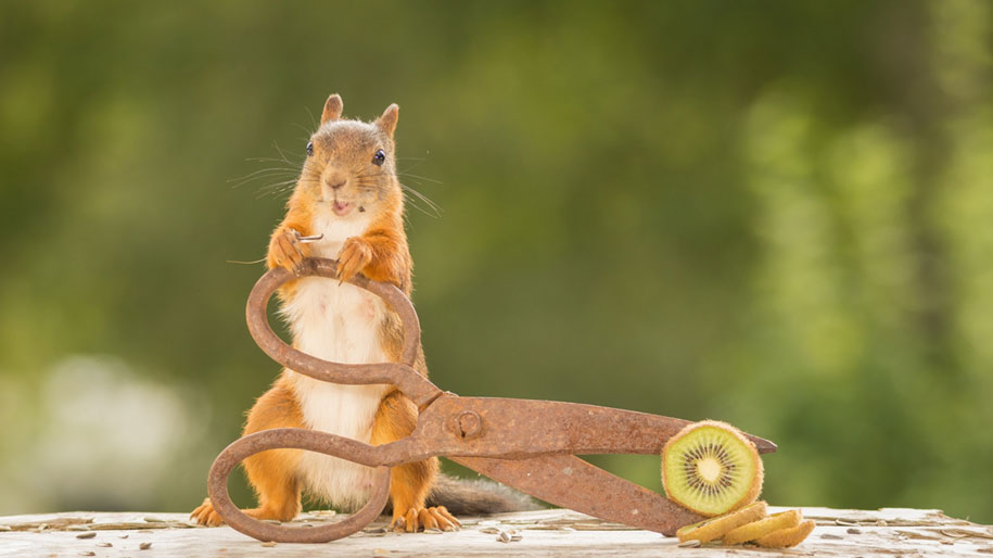 nature-animal-photography-backyard-squirrels-geert-weggen-3