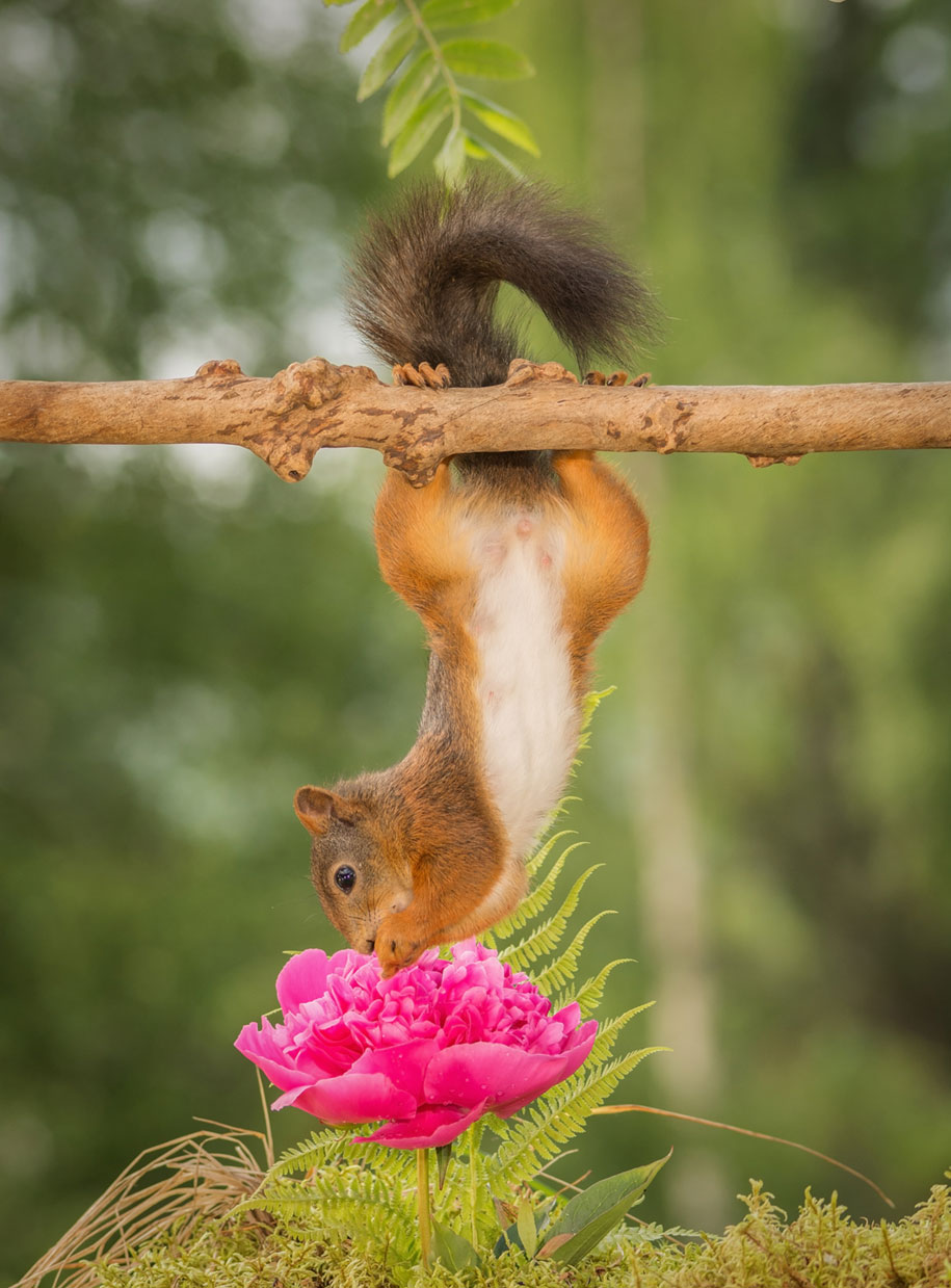 nature-animal-photography-backyard-squirrels-geert-weggen-5