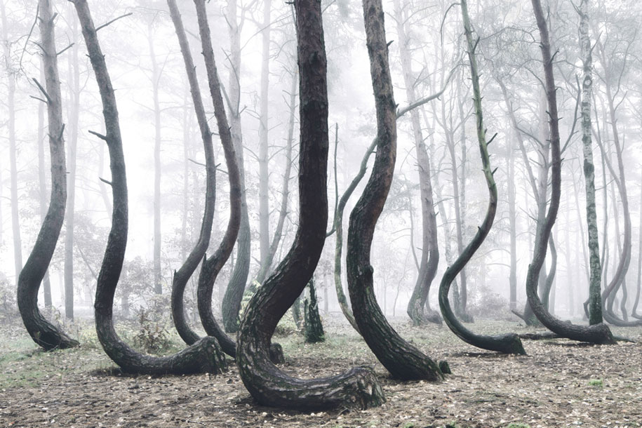 nature-photography-twisted-trees-crooked-forest-kilian-schonberger-4