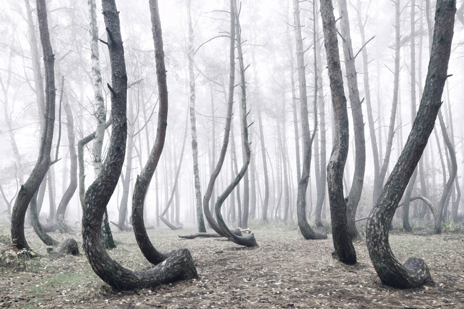 nature-photography-twisted-trees-crooked-forest-kilian-schonberger-7