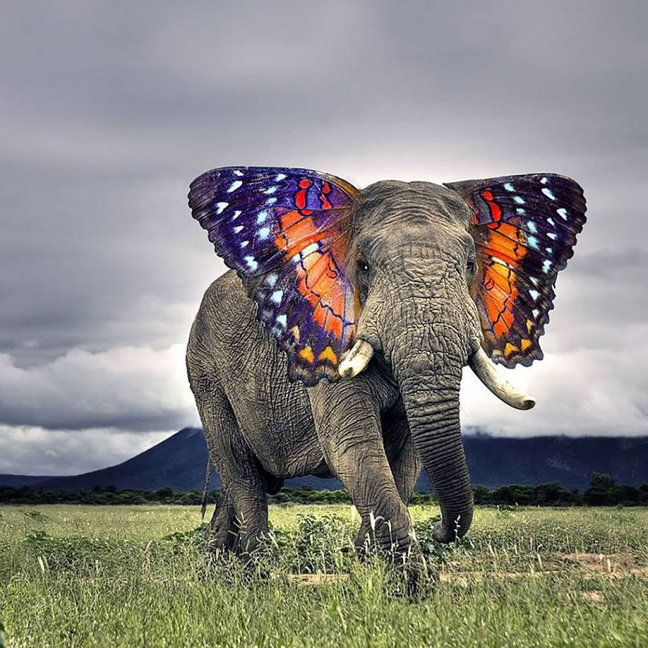 new-hybrid-animals-photoshop-18