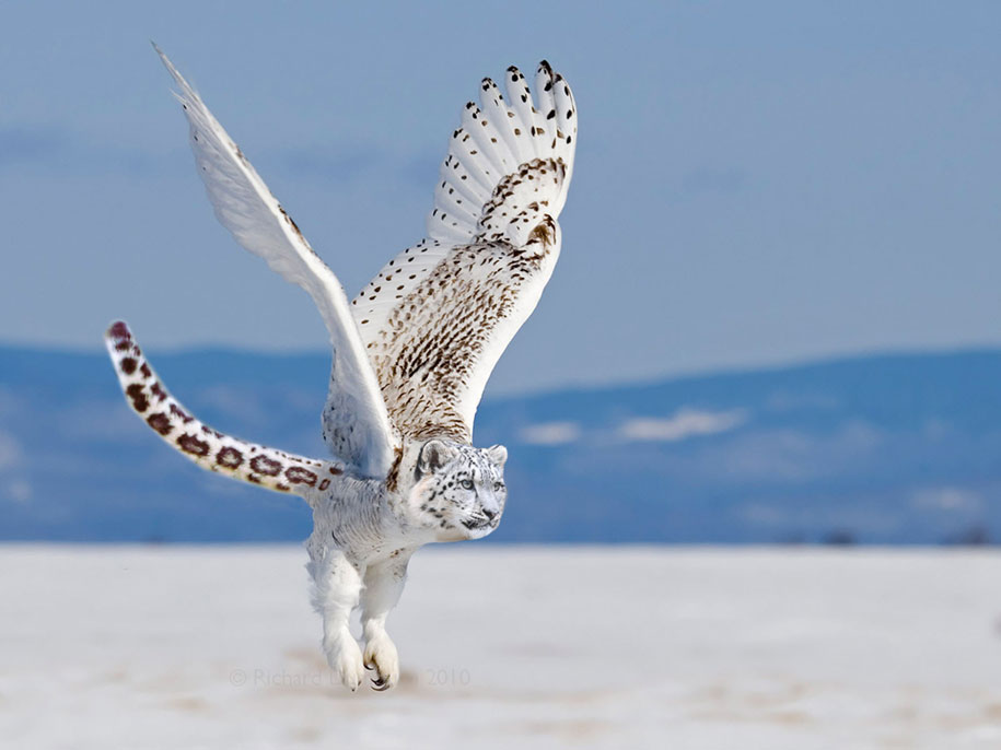 new-hybrid-animals-photoshop-35