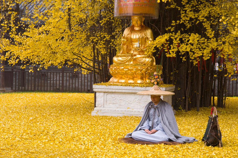 yellow-leaves-1400-year-old-ginko-tree-gu-guanyin-buddhist-temple-china-3