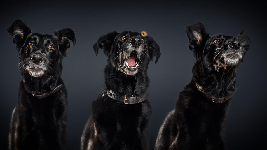 dogs-catching-food-photos-frei-schnauze-christian-vieler-2