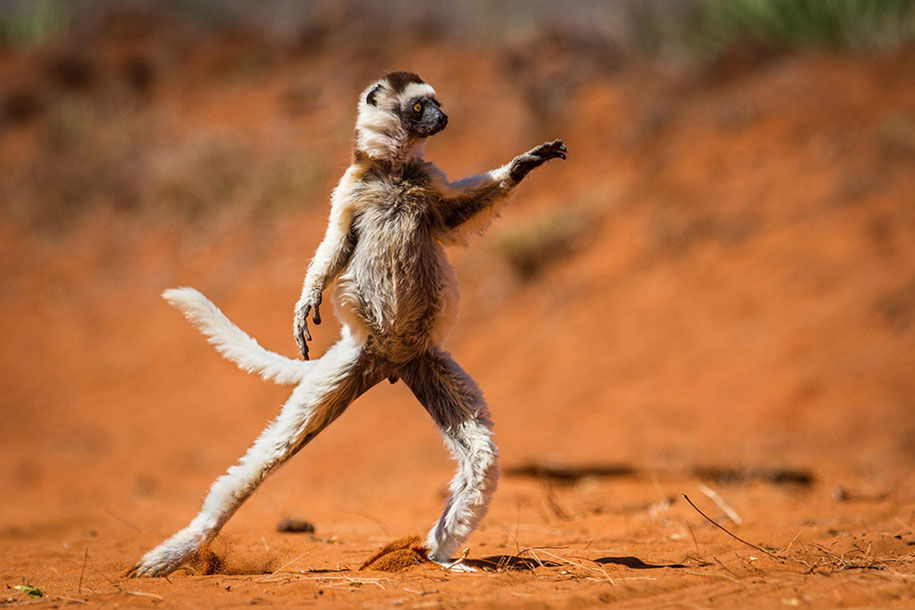 funny-animal-pictures-comedy-wildlife-photography-awards-paul-joynson-hicks-13