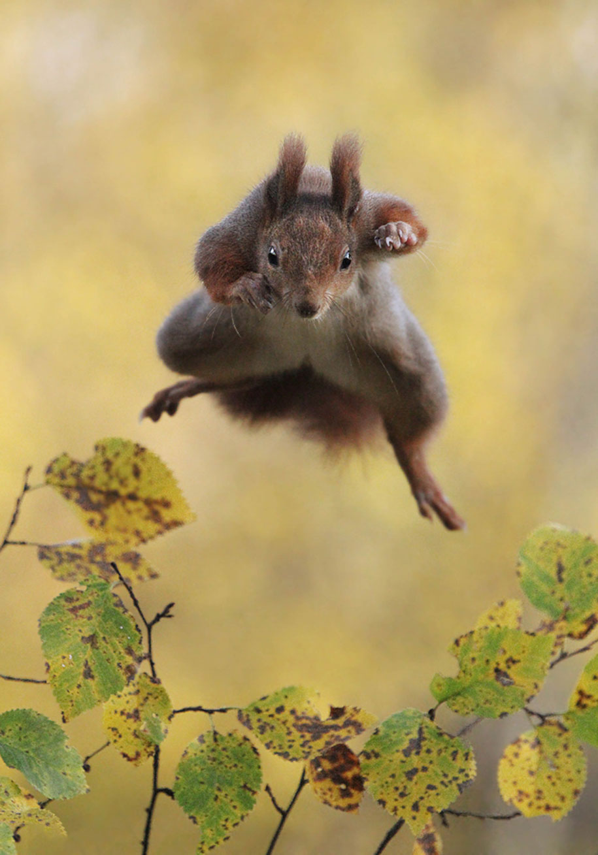 funny-animal-pictures-comedy-wildlife-photography-awards-paul-joynson-hicks-14