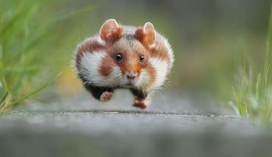 funny-animal-pictures-comedy-wildlife-photography-awards-paul-joynson-hicks-2