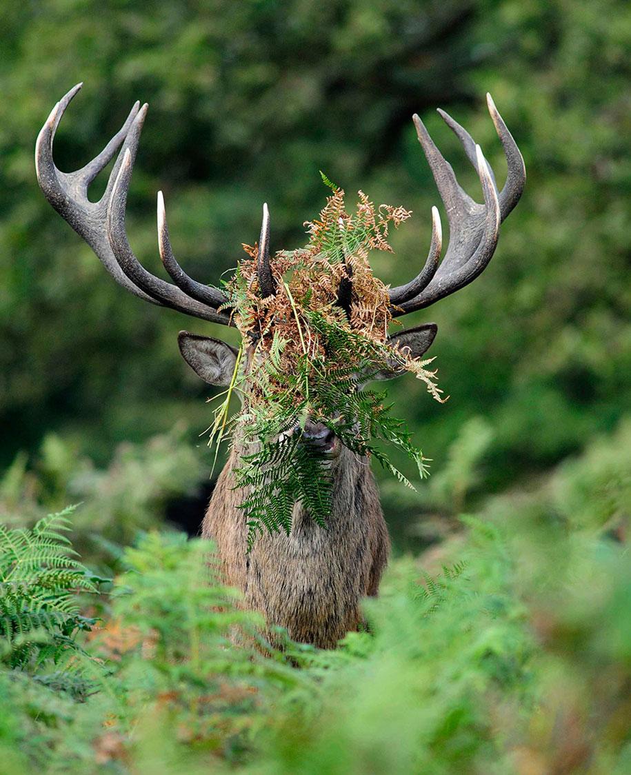 funny-animal-pictures-comedy-wildlife-photography-awards-paul-joynson-hicks-3
