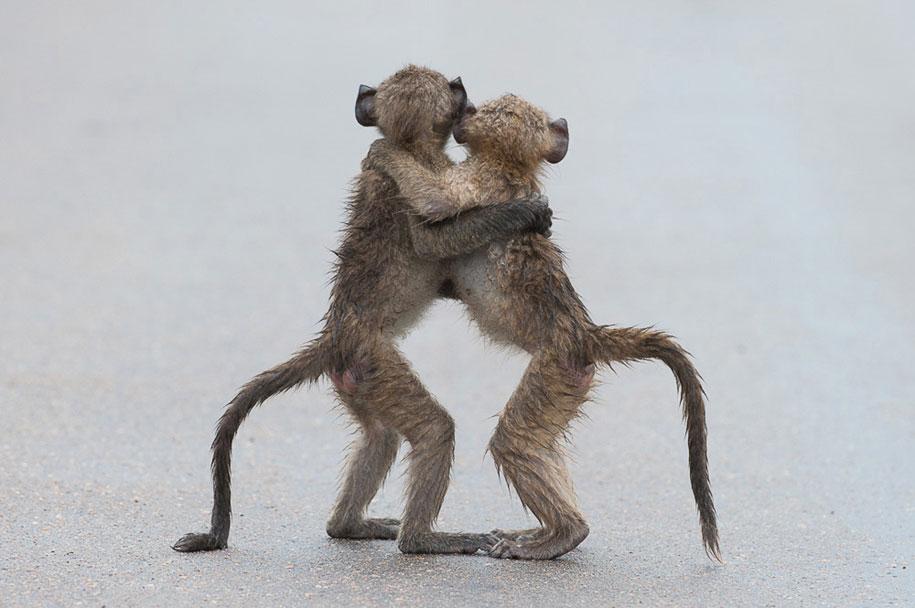 funny-animal-pictures-comedy-wildlife-photography-awards-paul-joynson-hicks-8