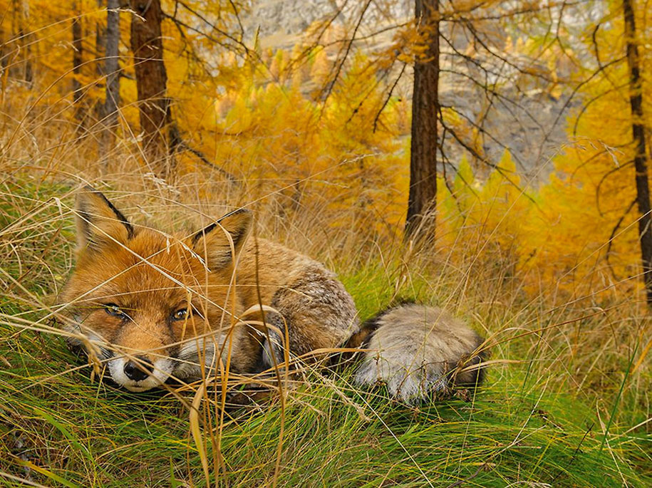 internet-favorite-picture-of-day-2015-national-geographic-13