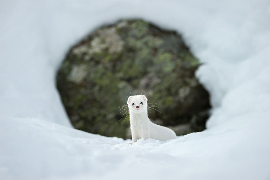 internet-favorite-picture-of-day-2015-national-geographic-9