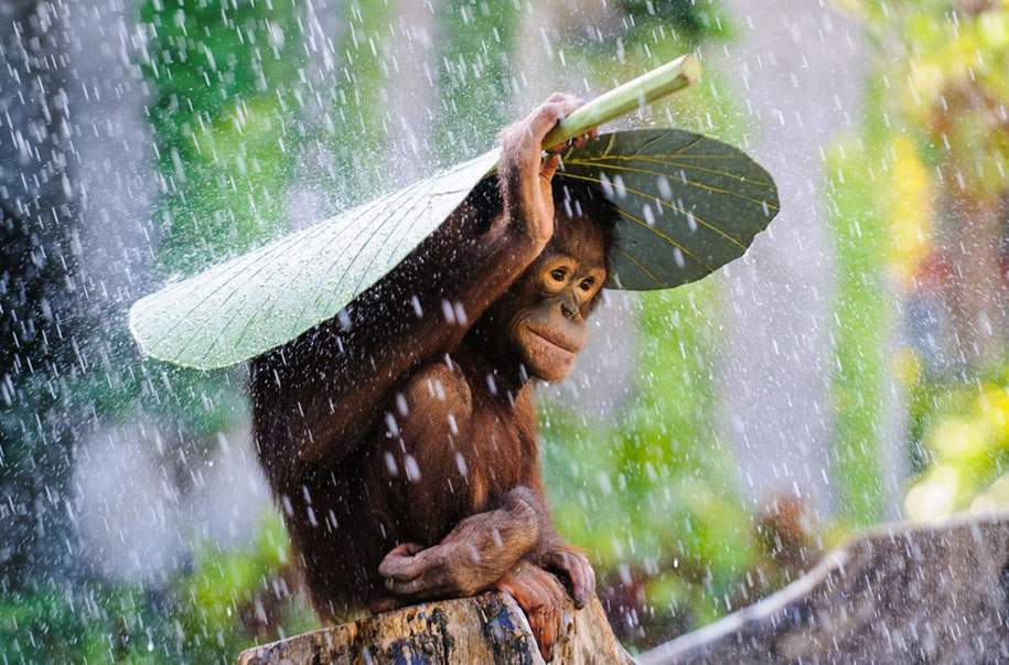 photography-winners-2015-national-geographic-photo-contest-11