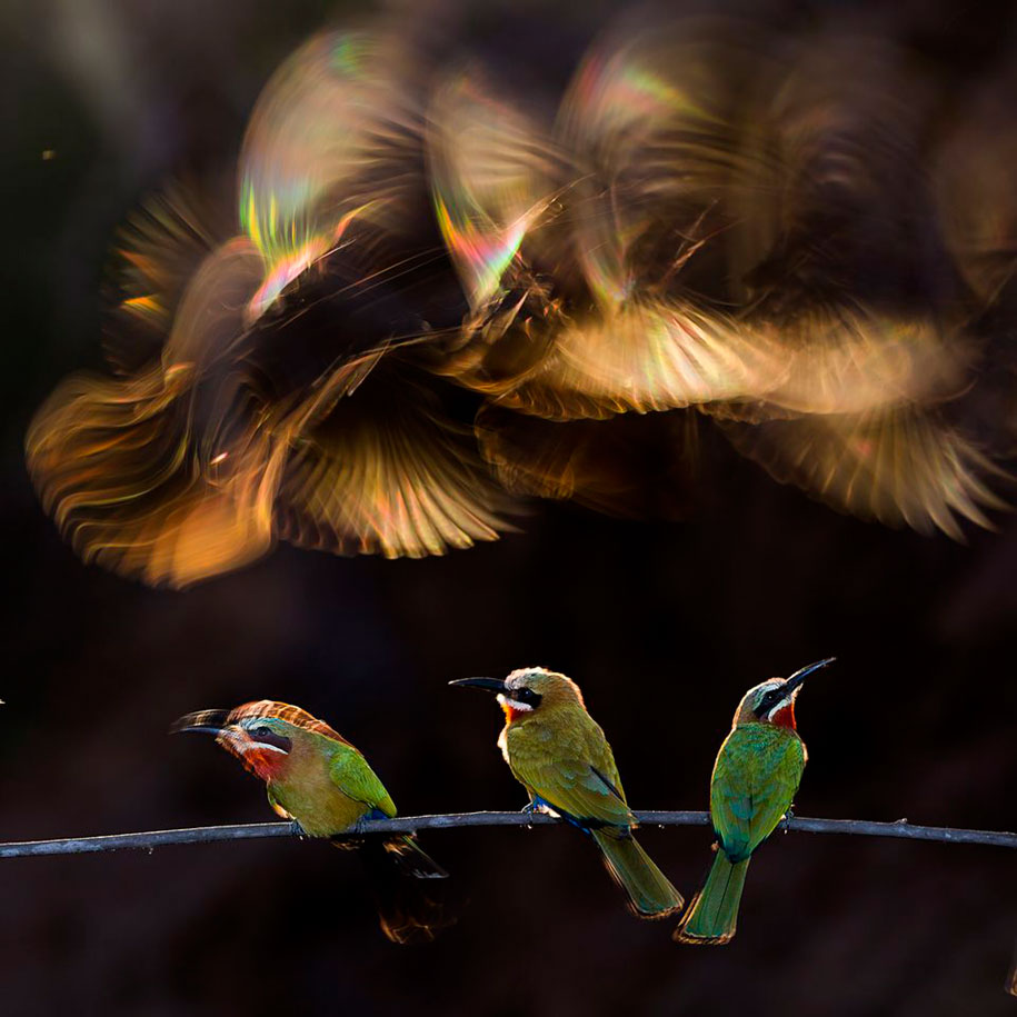 photography-winners-2015-national-geographic-photo-contest-3