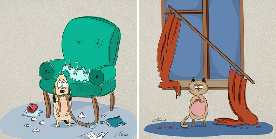 animals-pets-differences-cat-vs-dog-bird-born-2
