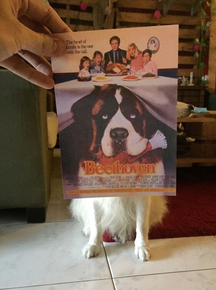 movie-posters-recreations-real-puppies-mashups-jaemy-choong-1